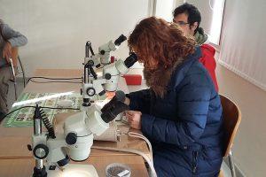 Voluntarios de SERBAL viendo insectos beneficiosos en las instalaciones del IFAPA La Mojonera