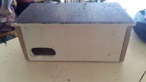 Caja nido de madera para vencejo común
