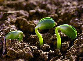 Juntos hacia la agroecología