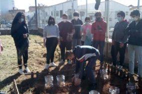 Un proyecto de ciencia ciudadana usa plantas de zanahoria para medir el cambio climático en un huerto escolar